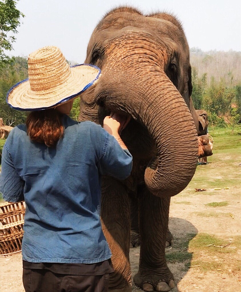 The Elephant in the Room – Lanna Kingdom Elephant Sanctuary
