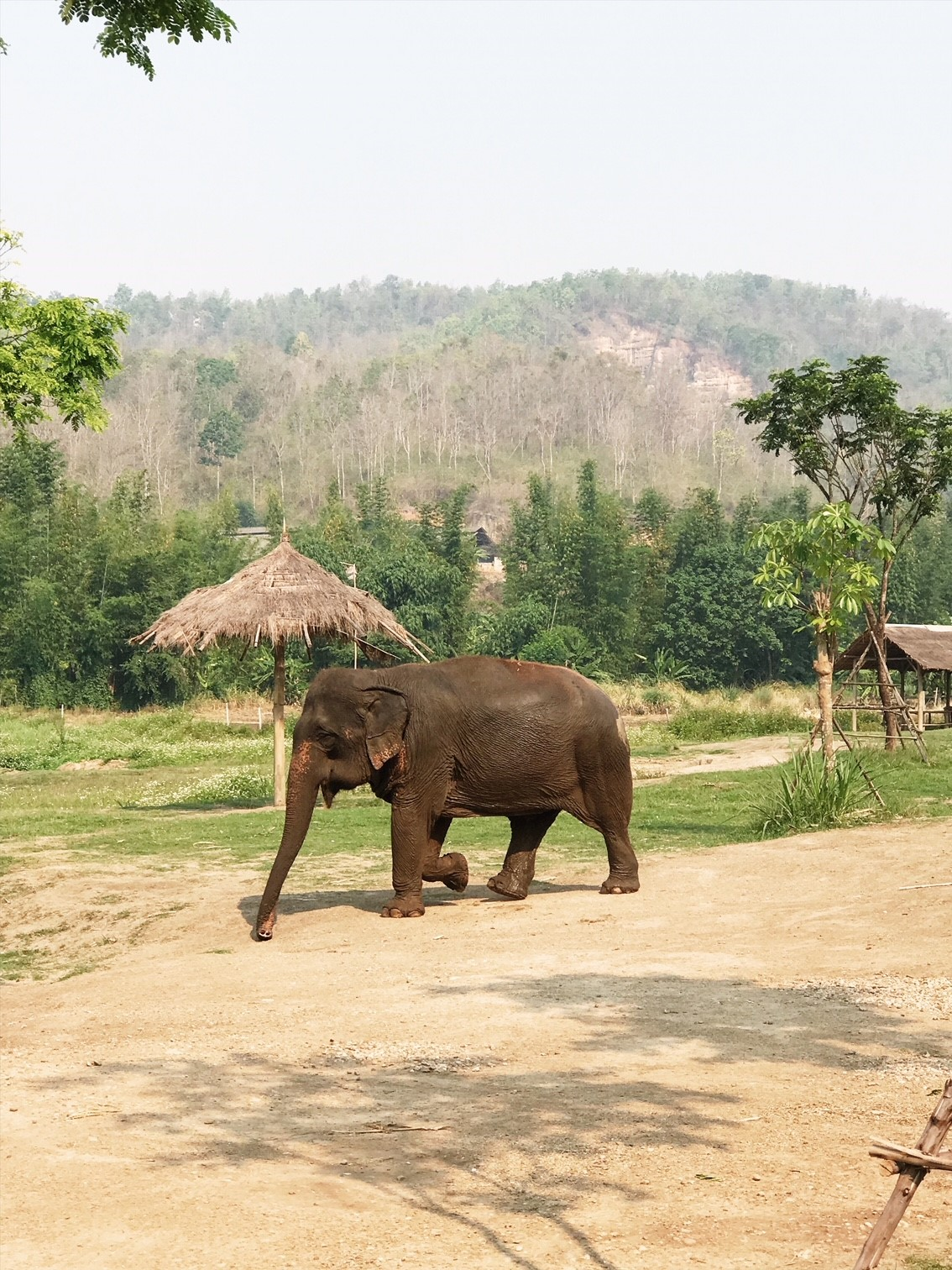 Magical Experience with the Elephants at Lanna Kingdom Elephant Sanctuary in Chiang Mai, Thailand.