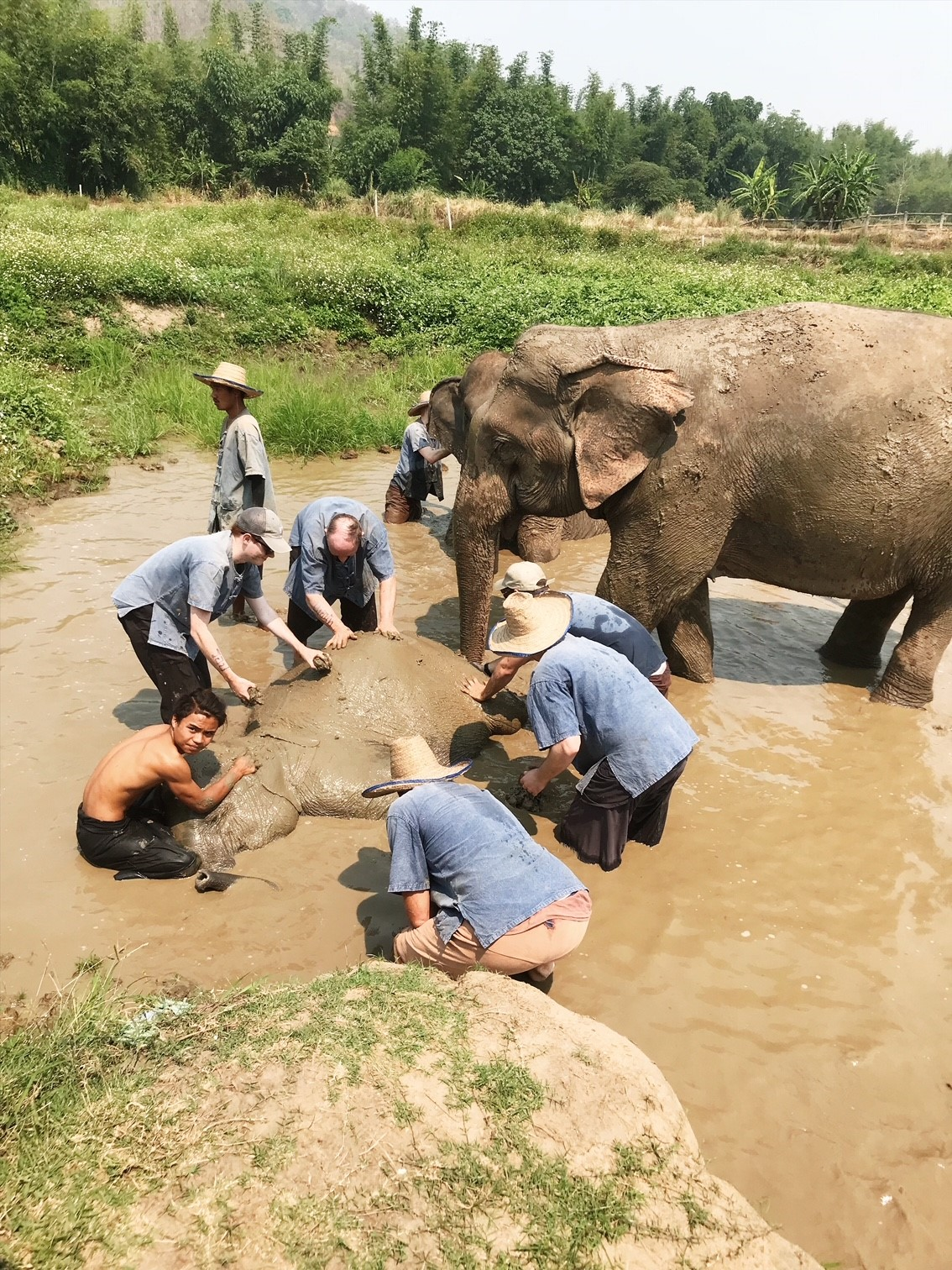 Magical Experience with the Elephants at Lanna Kingdom Elephant Sanctuary in Chiang Mai, Thailand. Ethical, no-riding Sanctuary.
