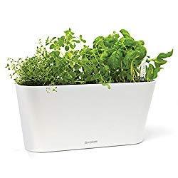 Aquaphoric Herb Planter