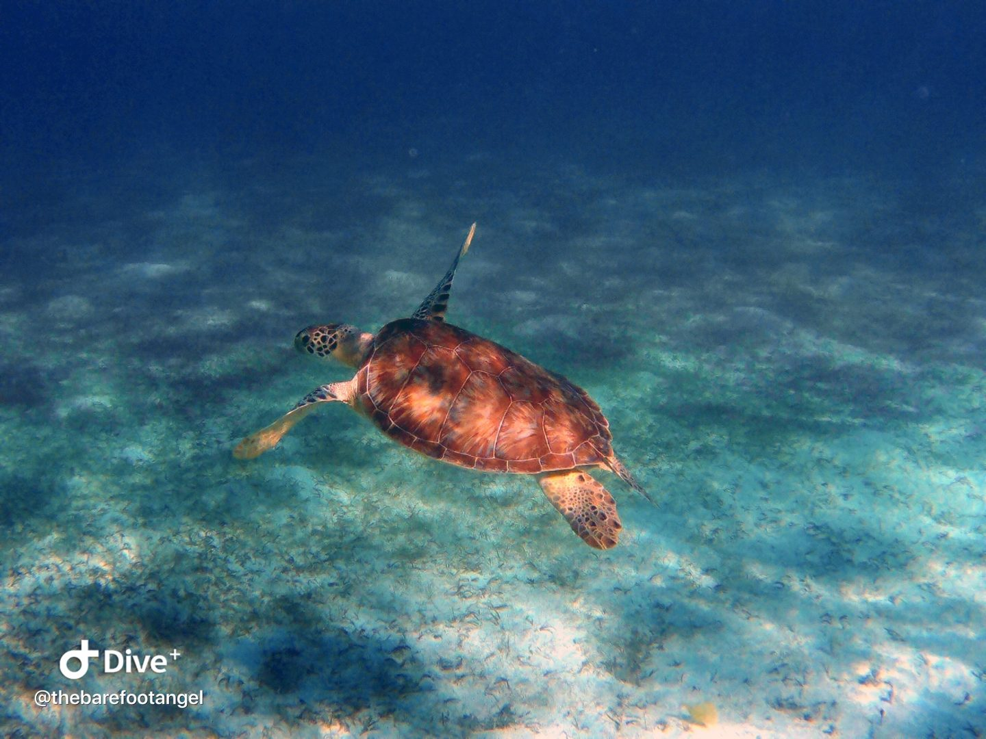 Underwater Photography Tips - Underwater turtle shot captured in the British Virgin Islands