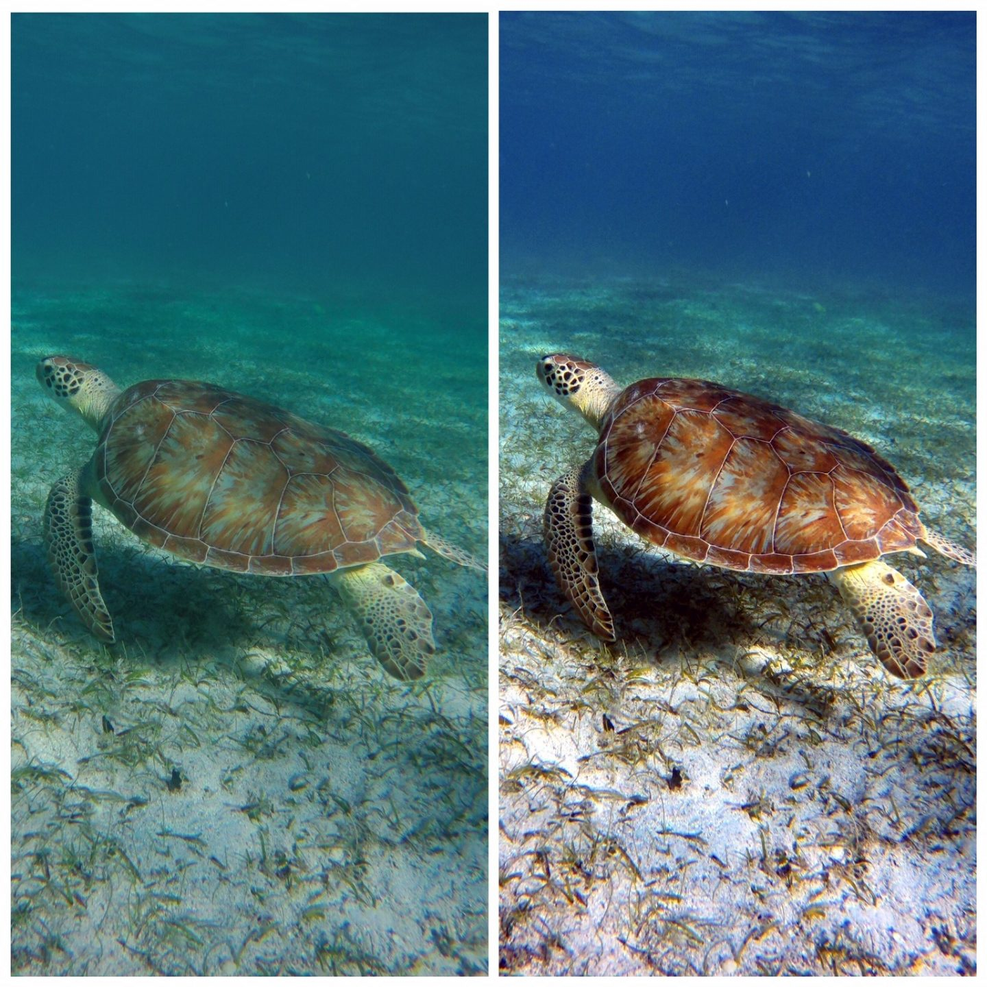 Before and After with Dive+ colour correction on your Underwater Photography.