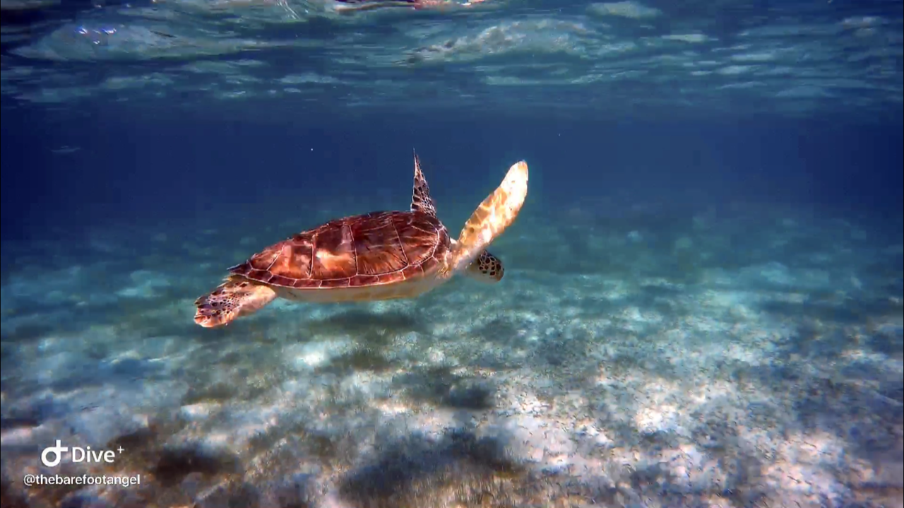 Underwater Turtle Photography - Why You Don't Need to Spend a lot on your Camera Equipment