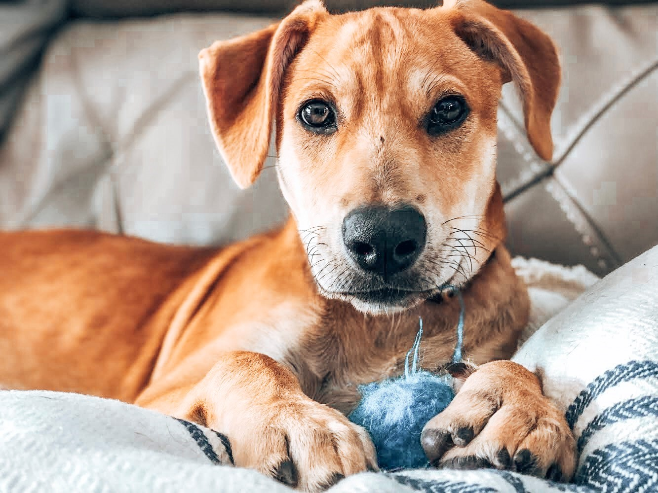 Adopt a Dog from the British Virgin Islands - Animal Charities transport Island Dogs to the United States