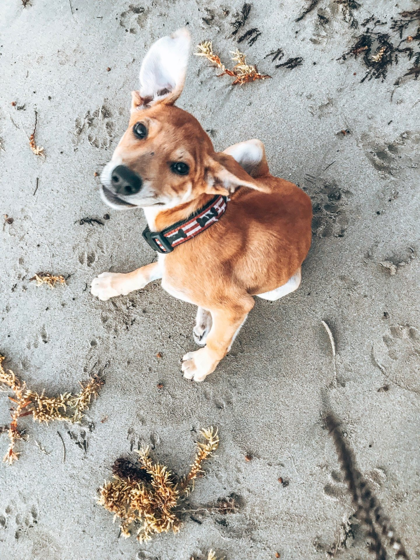 Fostering Island Pets - Animal Charities rely on Foster homes before transporting these dogs and cats to the United States